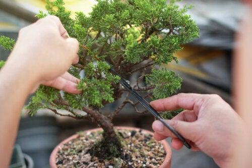 Aprende cómo hacer y cuidar los árboles bonsái