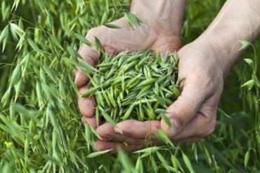 6 beneficios de la paja de avena