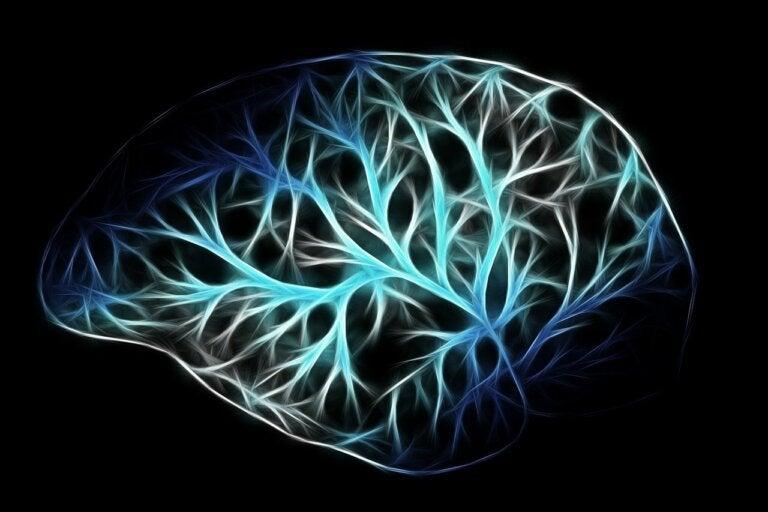 Abuso de drogas afecta de forma diferente el cerebro de hombres y mujeres, según estudios