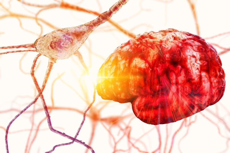 Estructura y partes de las neuronas