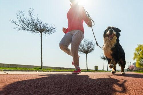Actividades físicas que puedes hacer con tu perro