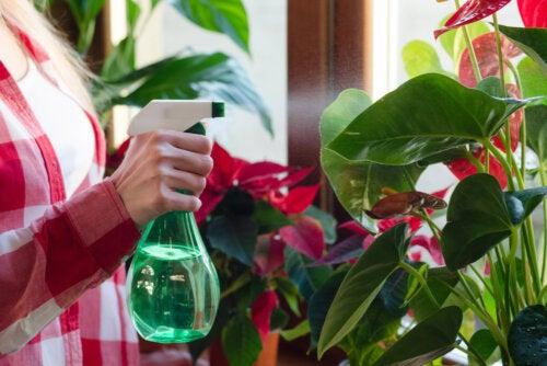 7 plantas de interior que absorben la humedad