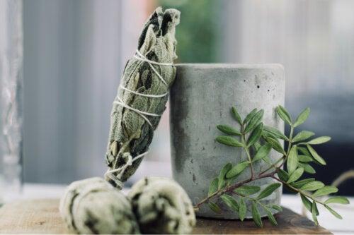 Aprende a purificar tu casa con la planta de salvia