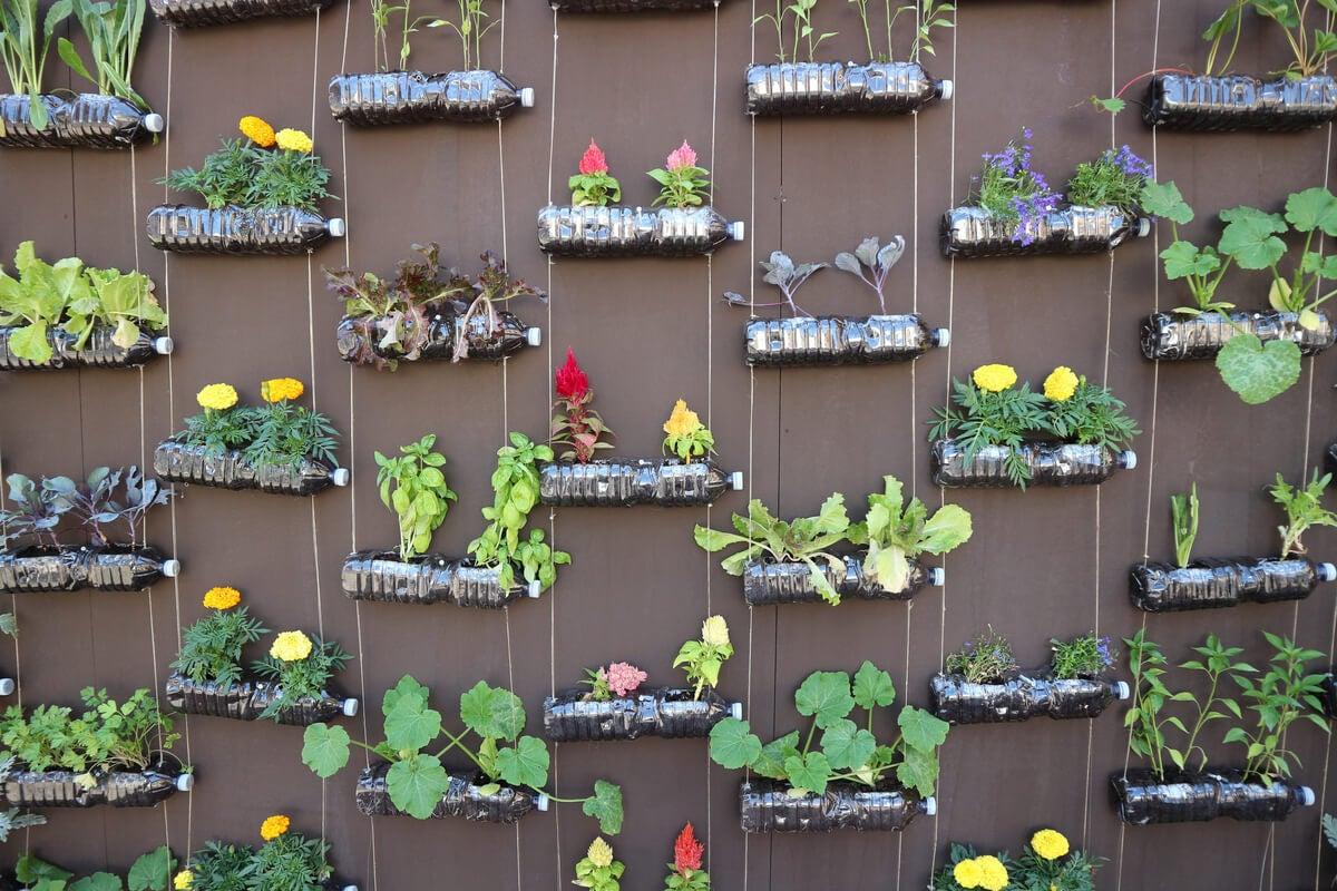 Jardín vertical para aprovechar botellas de plástico.