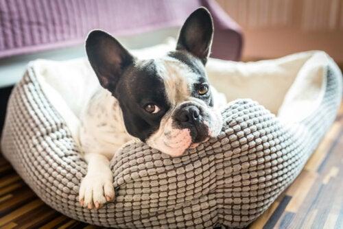 5 ideas para hacer la casa de tu mascota