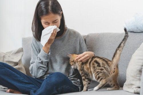 Alergia a los gatos y perros: ¿qué la causa?