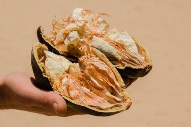 Fruto de baobab o pan de mono: características, beneficios y contraindicaciones