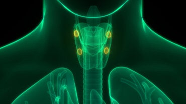 Hiperparatiroidismo: síntomas, diagnóstico y tratamientos