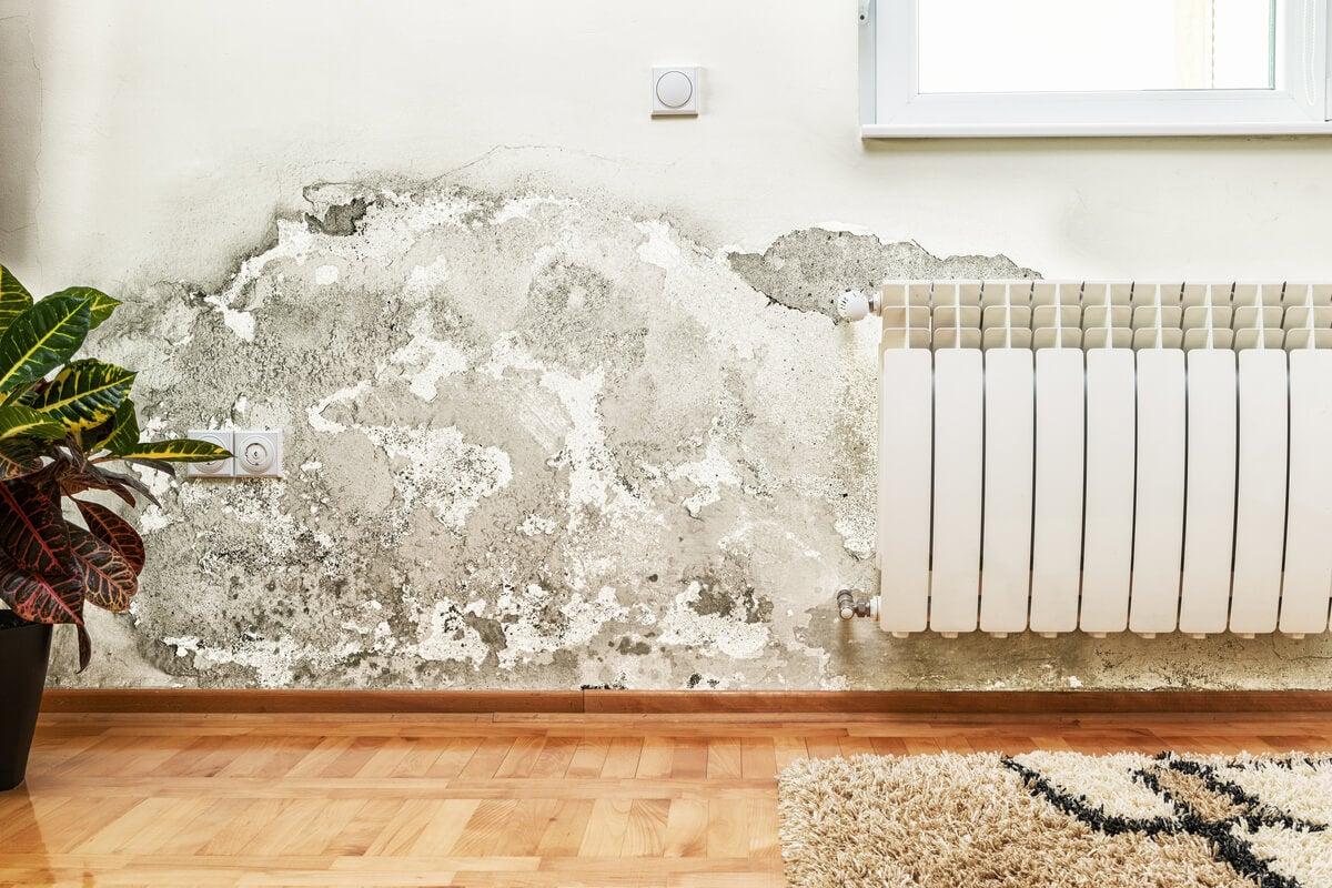 Problema de humedad cubierto por el seguro del hogar.