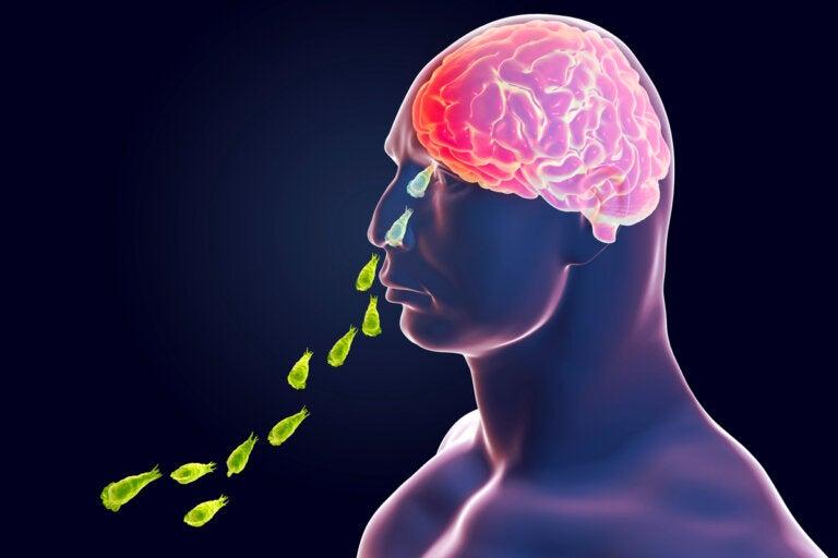 Infección por Naegleria fowleri: la ameba come cerebros