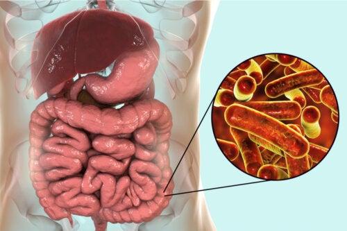 Infección por Shigella o shigelosis: causas, síntomas y tratamientos