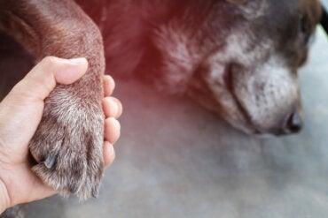 Consejos y cuidados para los últimos días de nuestras mascotas