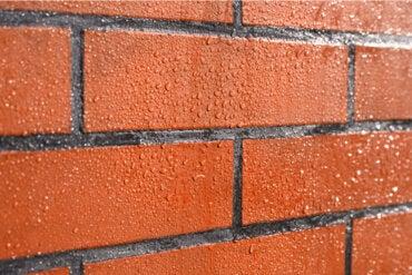 ¿Cómo proteger las paredes de ladrillo contra el moho?