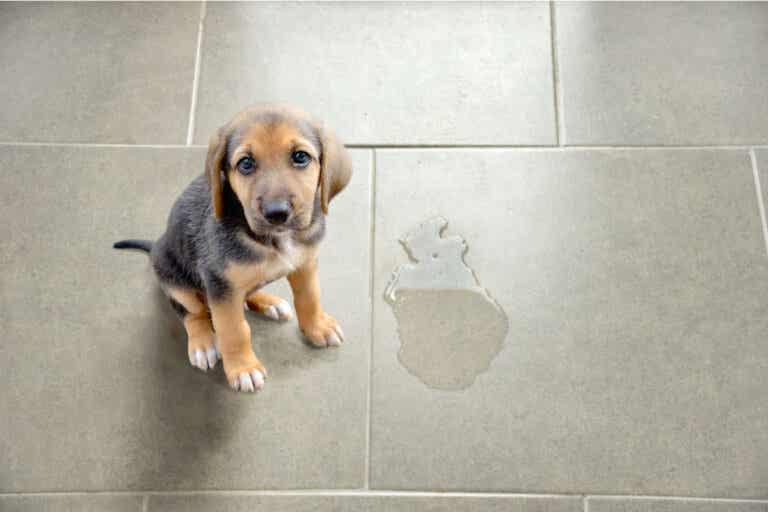 4 cosas que debes evitar al tratar de limpiar orines