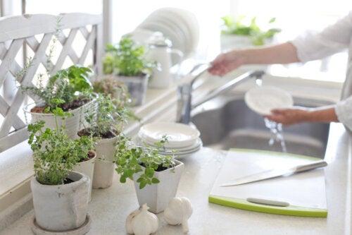 5 beneficios de tener plantas en la cocina
