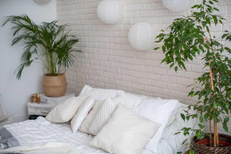 5 ideas para decorar con plantas cualquier espacio de tu casa