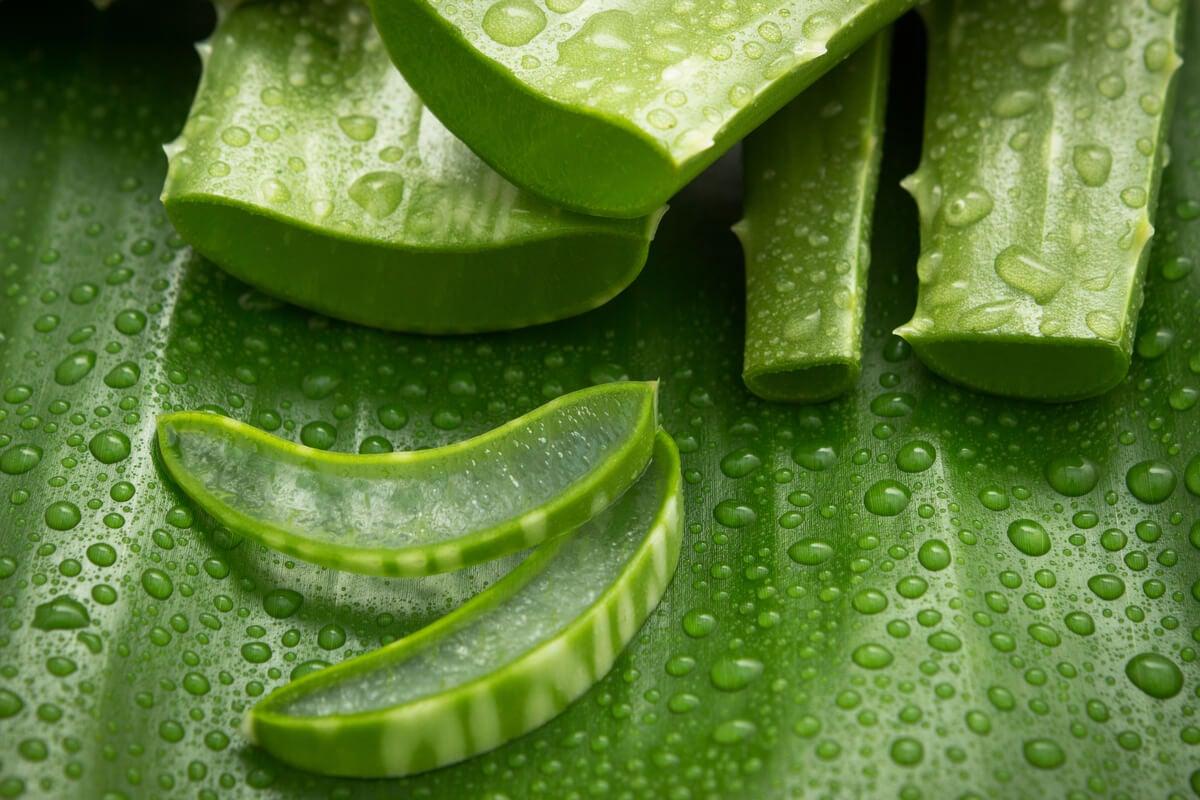 Aloe vera para las arrugas como alternativa al bótox.