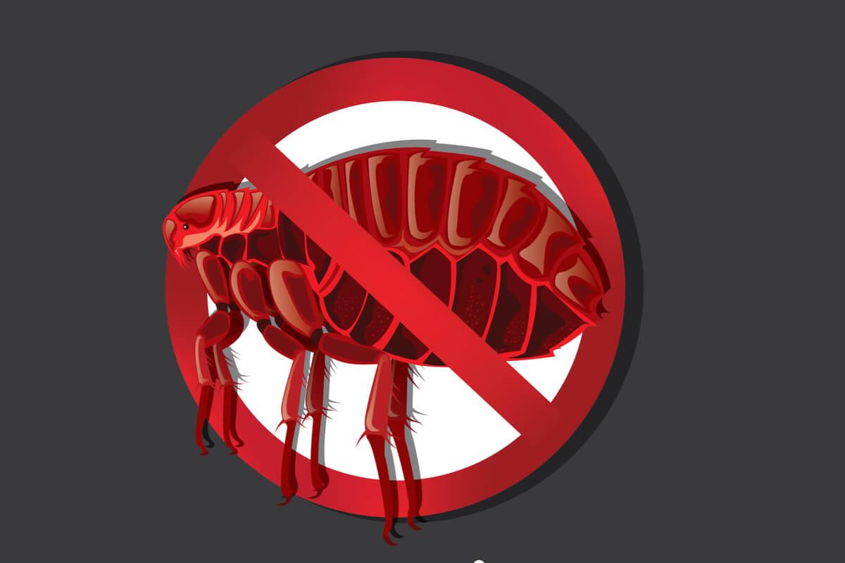 Detener parásitos.