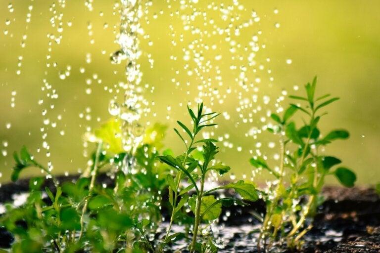 10 consejos para evitar malgastar agua en el jardín