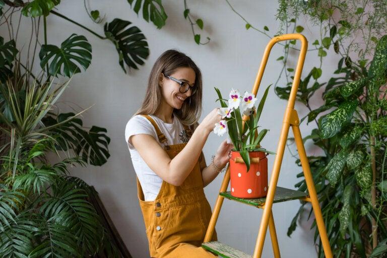Cómo trasplantar orquídeas correctamente