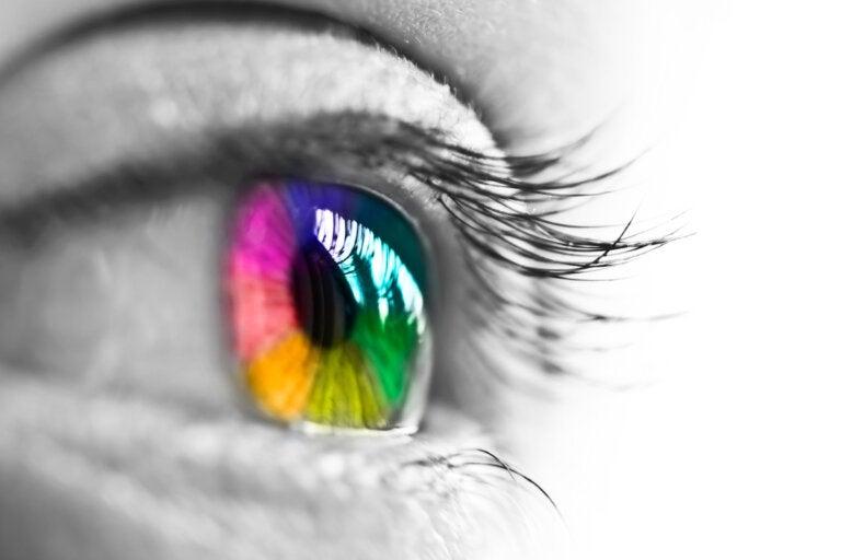 ¿Cómo perciben nuestros ojos los colores?