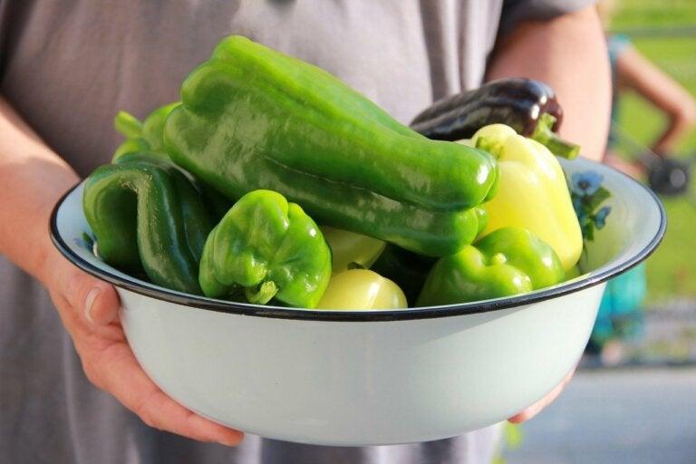 ¿Cómo plantar pimientos en casa?