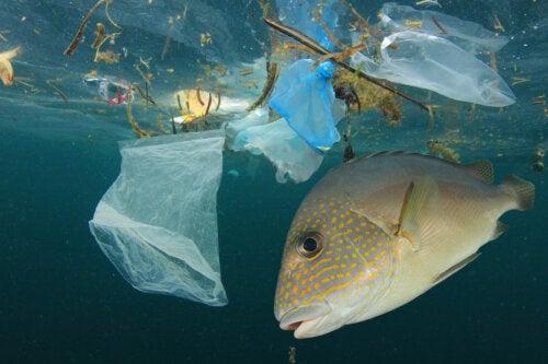 Estudio encuentra microplásticos en todas sus muestras de comida marina