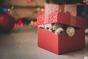 Regalar mascotas: ¿es buena idea?