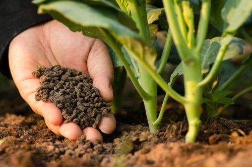¿Qué son los abonos orgánicos y qué tipos existen?