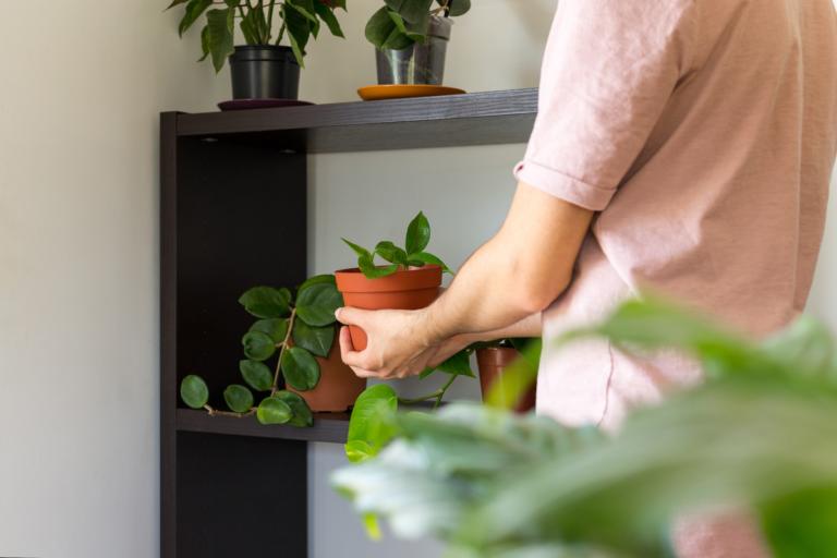 Plantas enredaderas: tipos y cuidados