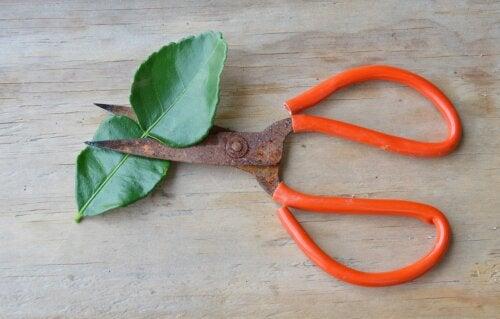 Cómo limpiar las herramientas de jardín oxidadas