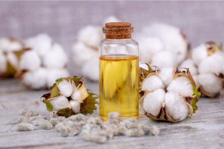 Aceite de semilla de algodón: usos, beneficios y riesgos