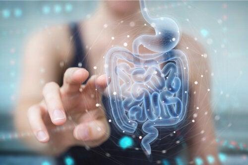 ¿Cómo afecta el ejercicio a la microbiota intestinal?
