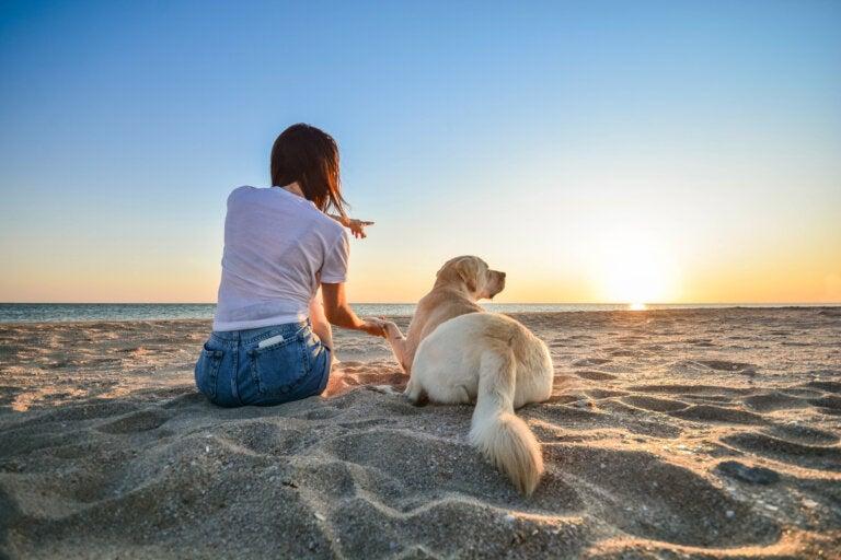 14 consejos que debes aplicar si llevas a tu perro a la playa