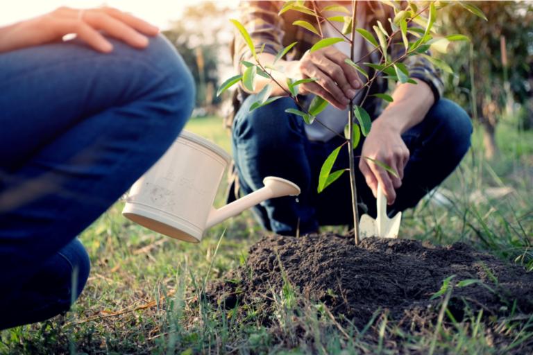 Tipos de árboles para el jardín y sus características
