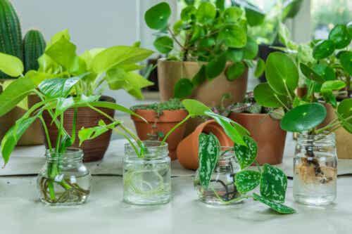 10 plantas que se pueden cultivar en agua