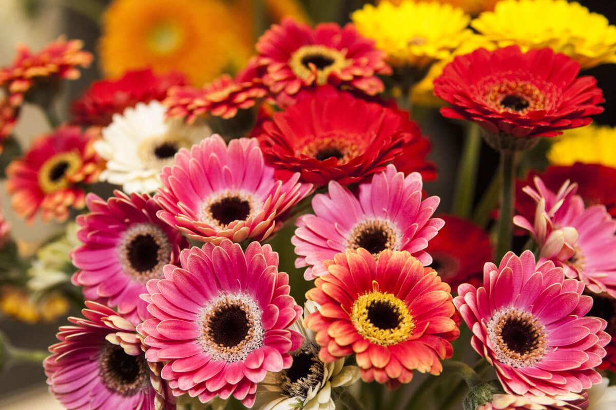 Flores en las frases sobre El Principito.