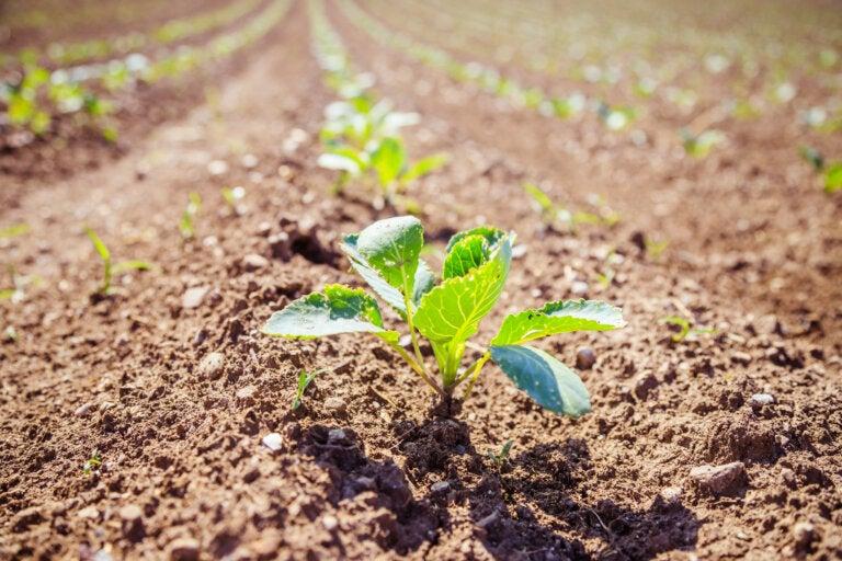 Agricultura biodinámica: origen y características