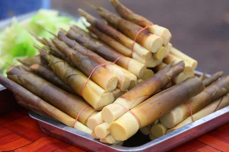 Brotes de bambú: nutrición, usos y preparación