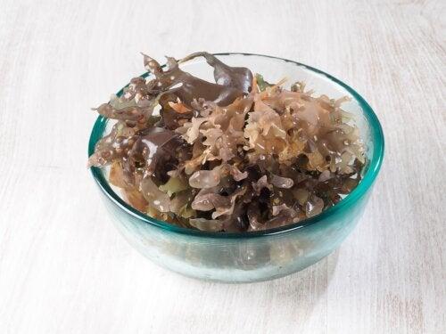 Musgo marino: nutrientes, posibles beneficios y recomendaciones