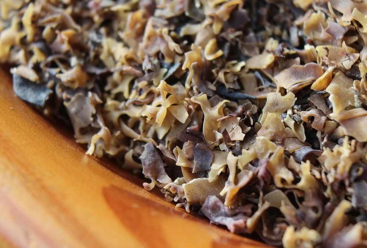 Nutrientes del musgo marino