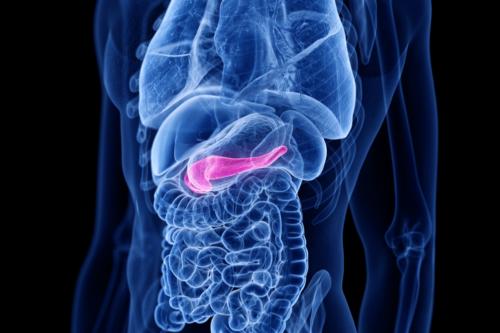 Hormona colecistoquinina: ¿qué es y para qué sirve?