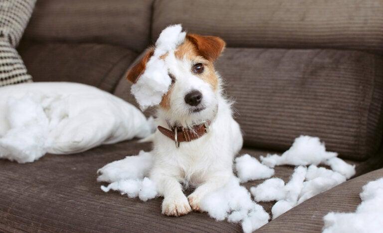 8 recomendaciones para tener una casa a prueba de mascotas