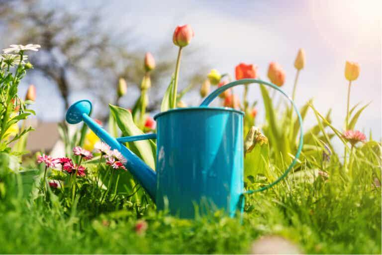 9 consejos para tener tus plantas saludables en el verano