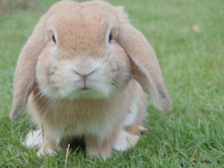 ¿Qué considerar antes de tener un conejo como mascota?