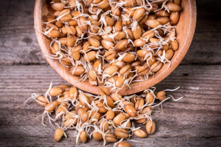 Germinado de trigo: nutrición, propiedades y cómo prepararlo