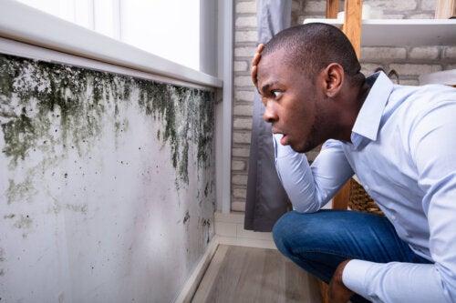 9 efectos del moho negro sobre la salud
