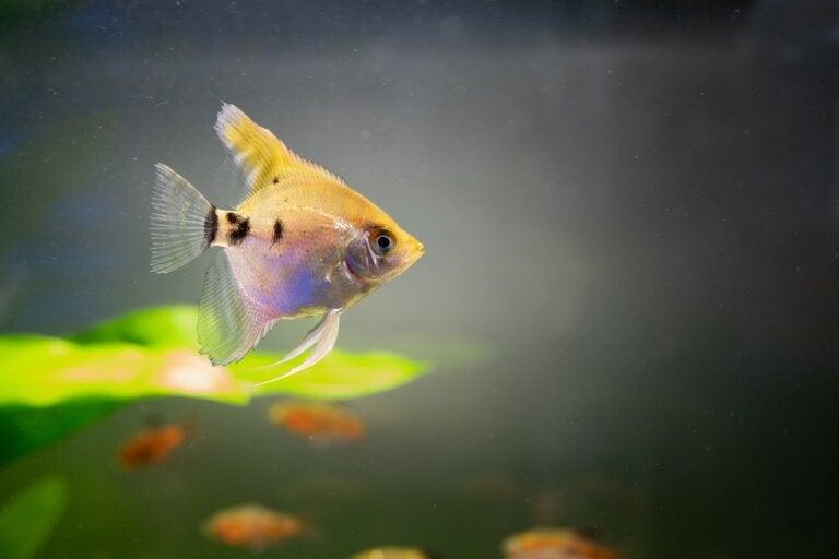 Agua turbia en el acuario: ¿cómo limpiarla?