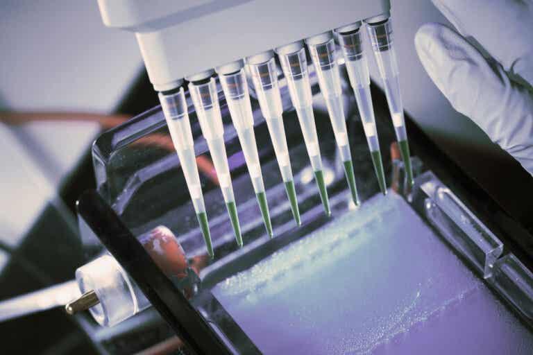 ¿Qué es una prueba de inmunofijación y para qué se utiliza?