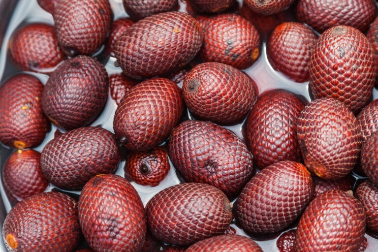 Aguaje, un fruto amazónico